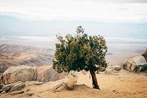 Lamentations - Job: God's Path Through Pain